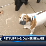 beware pet flipping scam