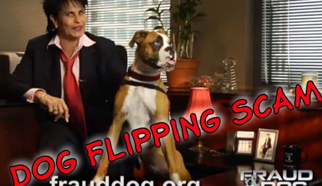 Beware of Dog Flipping Scams